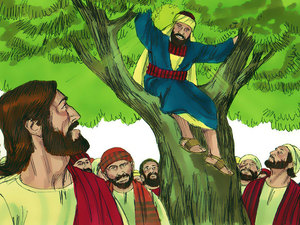 Zacchaeus (Creative Commons - Sweet Publishing)