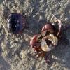 Ex-Crab 2