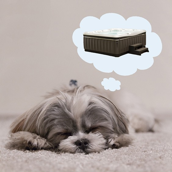 a sweet little doggy sleeps and dreams of the therapeutic and health benefits of hot tub ownership