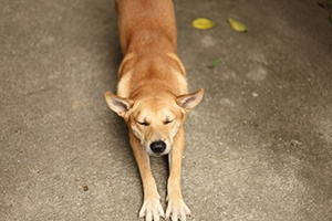 a dog stretches with new stretching techniques
