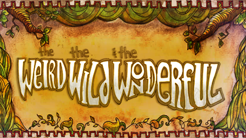 The Weird, the Wild, and the Wonderful