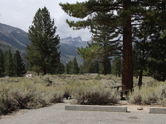 ⛺🐛 Crags Campground, Humboldt-Toiyabe National Forest
