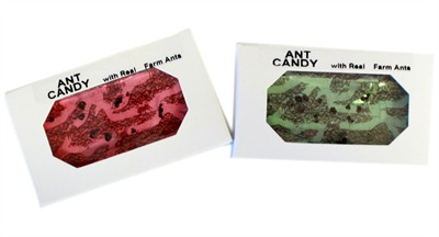 Ant Candy 4ct.