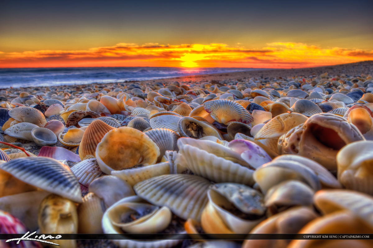 Seashells at Beach During Sunrise Hutchinson Island Florida