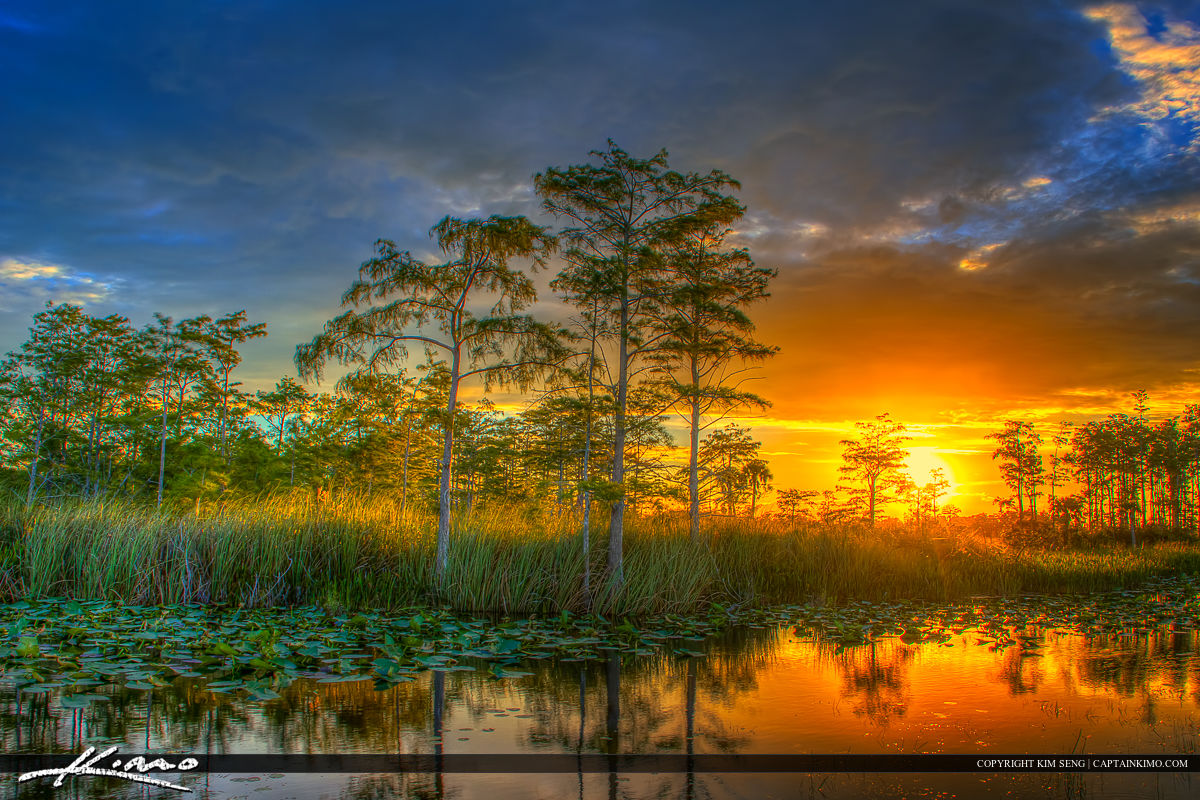 Florida wetlands sunset cypress tree landscape for Landscape pictures