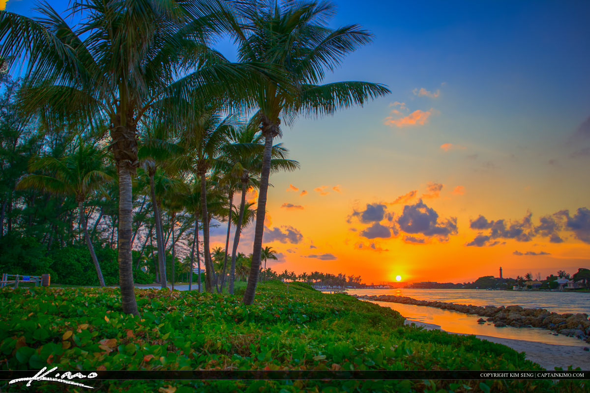 Jupiter Inlet Sunset Coconut Tree at Park