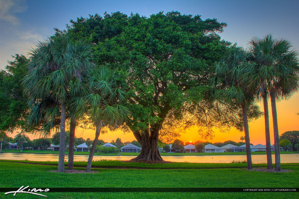 lake catherine banyan tree sunset at park
