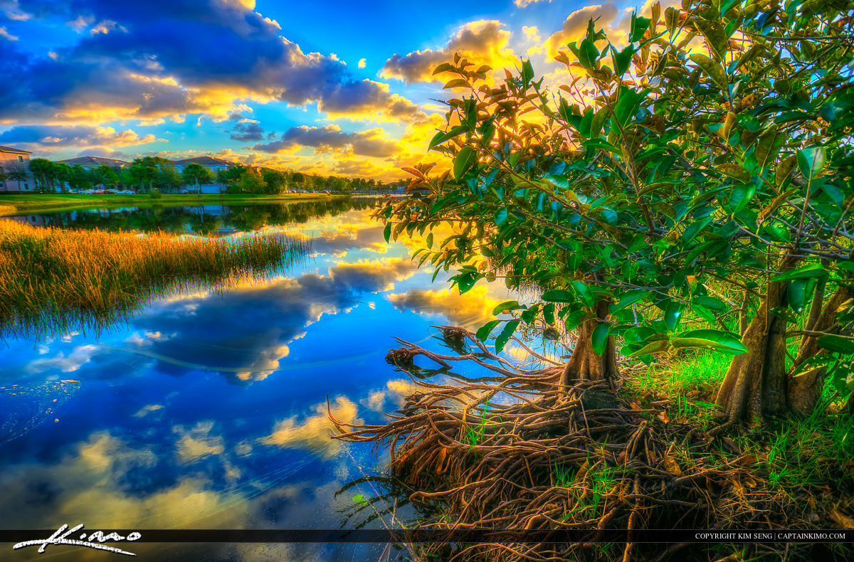 Sunrise Palm Beach Gardens Pond Apple Tree at Lake