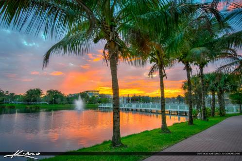 Coconut Trees Downtown At Palm Beach Gardens Florida