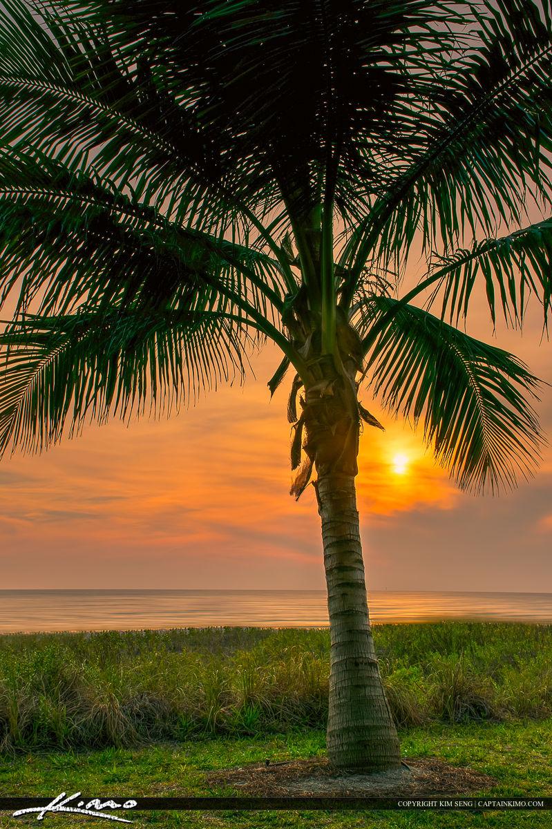 Naples Florida Coconut Palm Tree At Sunset on Naples Florida Pier Sunset