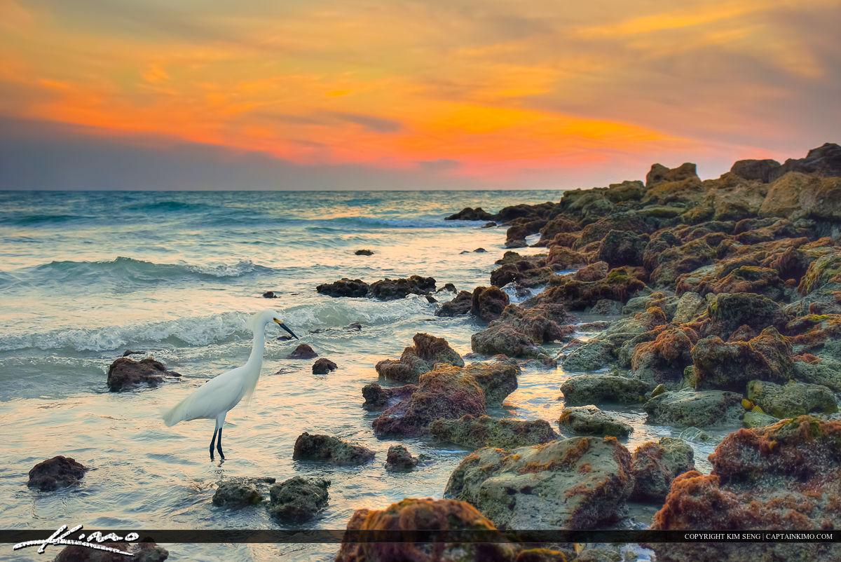 Naples Florida White Bird Egret Along Inlet - Florida naples