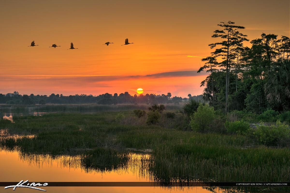 Sandhill Crane Flock in Flight at Sunrise