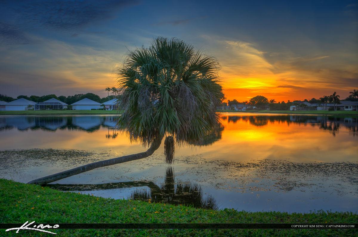 Sunset Lake With Palm Tree Beach Gardens Florida
