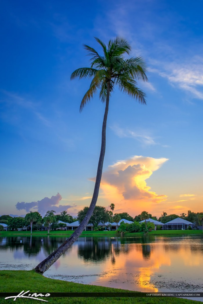 Sunset at lake catherine with coconut tree pbg - Palm beach gardens mall shooting ...