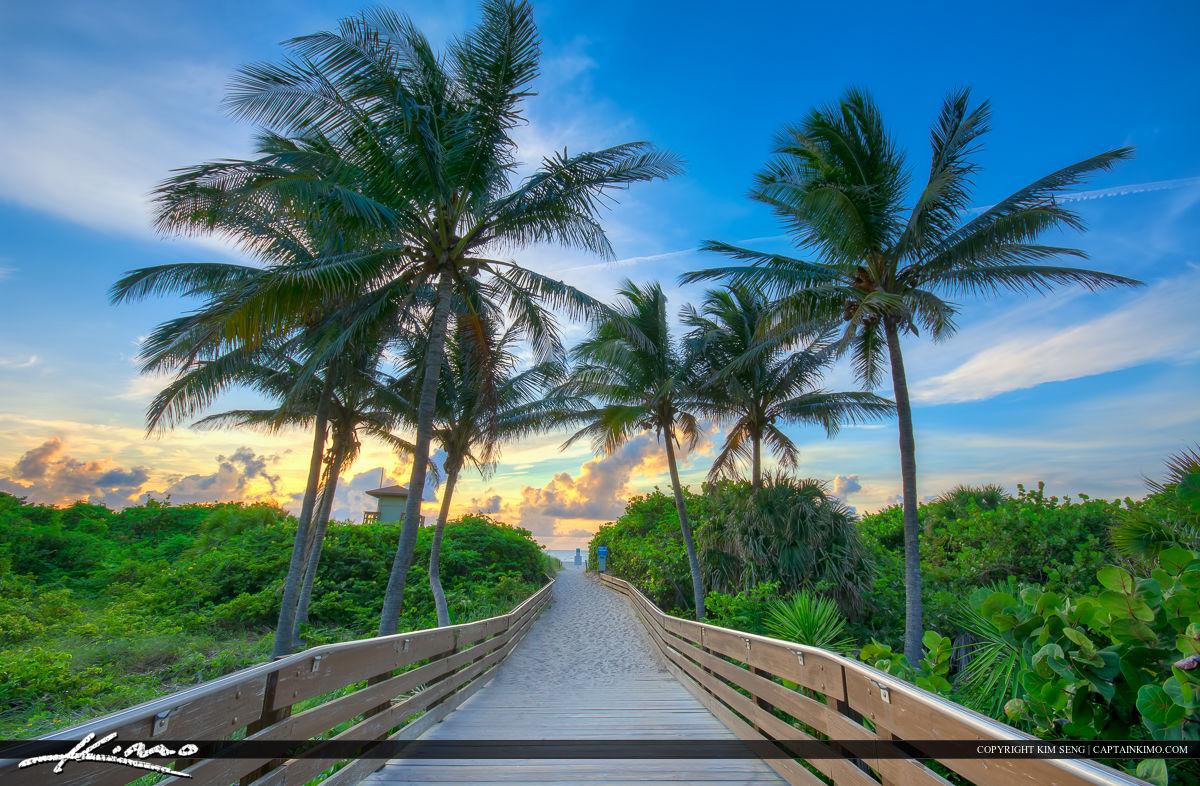 Coconut Tree At Ocean Reef Park Riviera Beach Florida