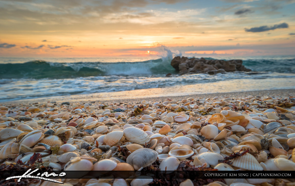 Seashell Beach Sanibel Island