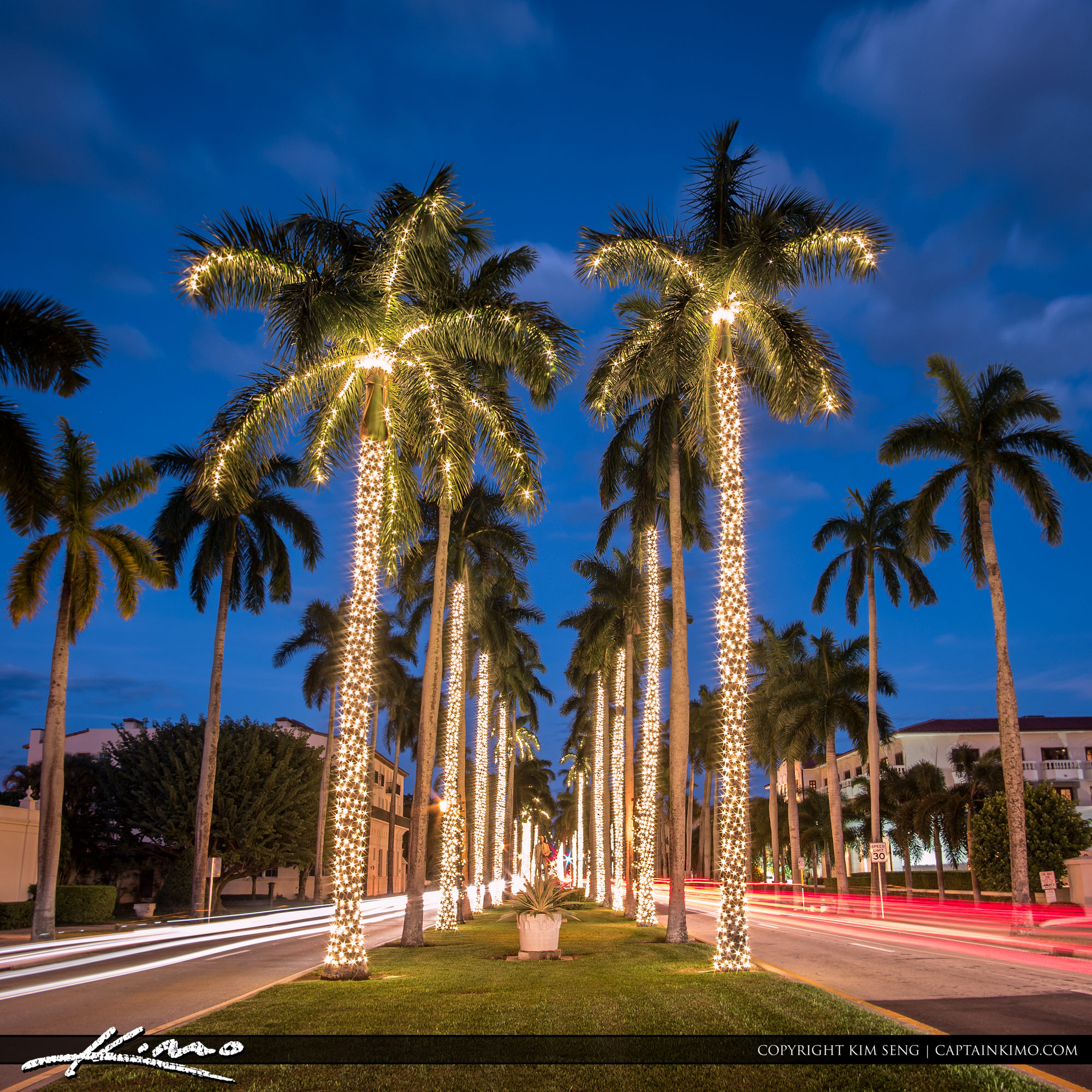 Christmas Lights In Palm Trees.Royal Palm Tree Christmas Lights Palm Beach Island Hdr