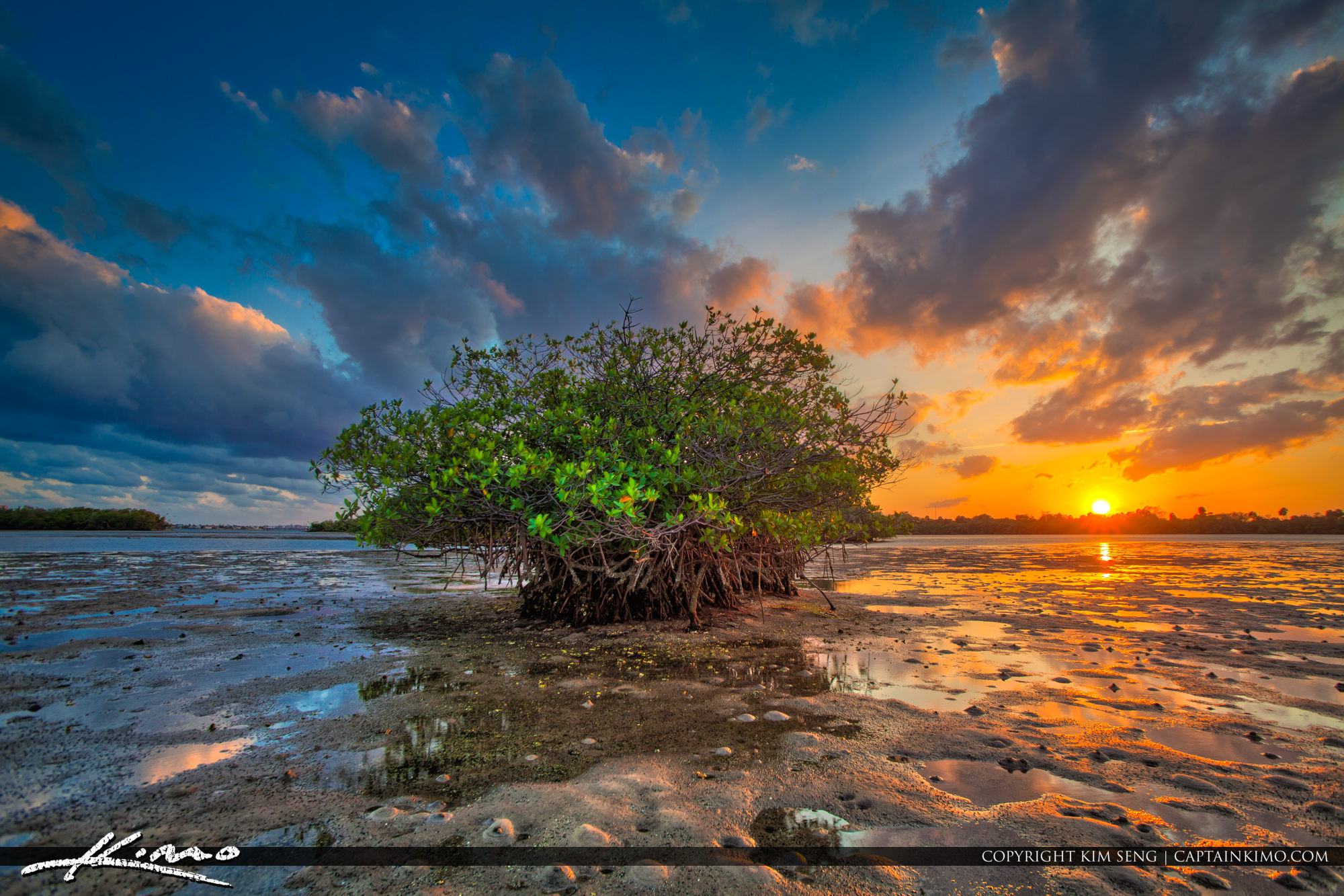 Mangrove Island Sunset Palm Beach Florida