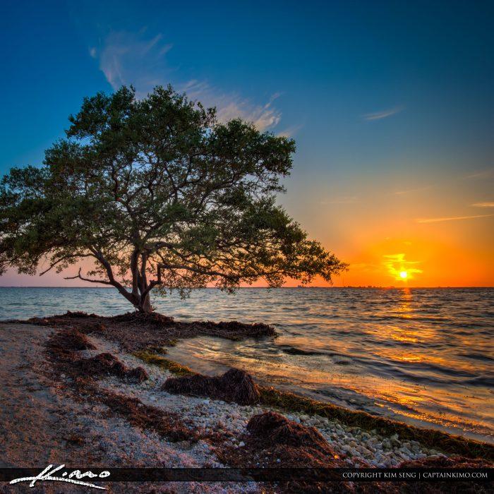 Sunset Mangrove Tree Tampa Bay Picnic Island Park