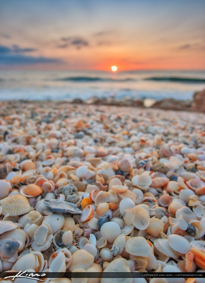 Shells at the Beach during Sunrise