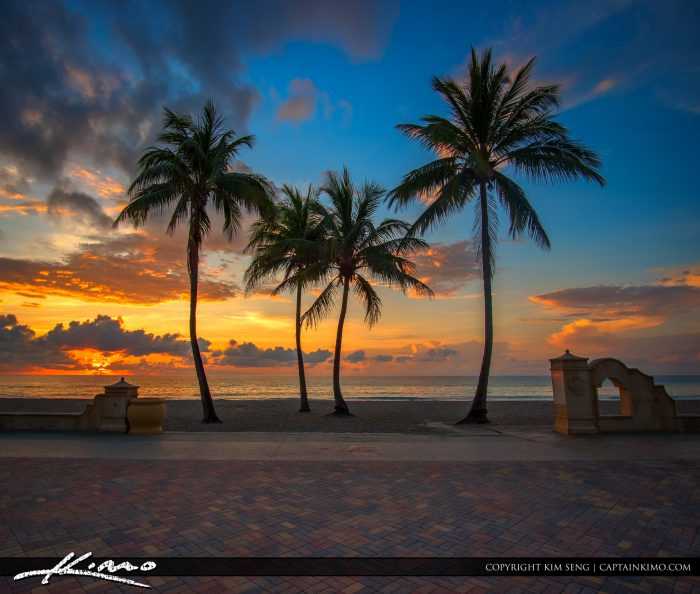 Hollywood Beach Sunrise Coconut Tree Sunrise