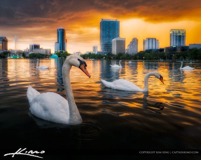 Swan Lake Eola Orlando Florida