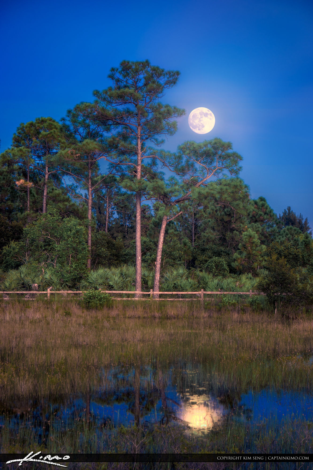 Acreage Pines Natural Area Moon Rise