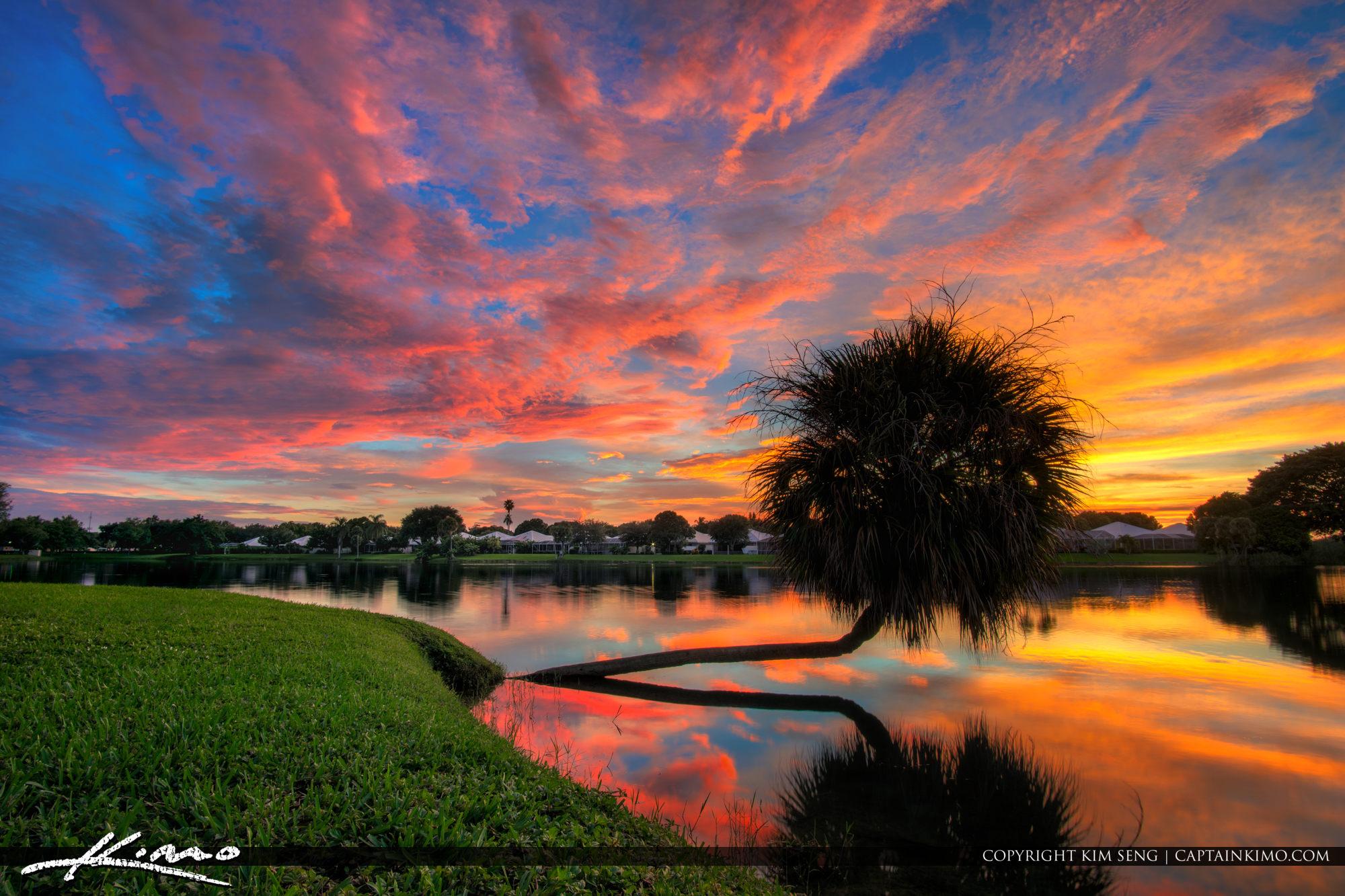 Palm Tree Sunset Over Lake