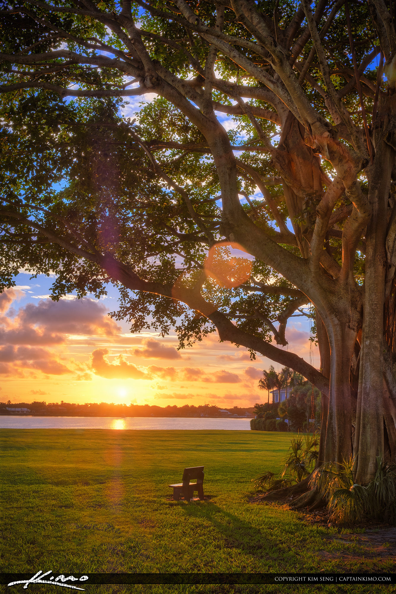 Sunrise Under Banyan Tree North Palm Beach