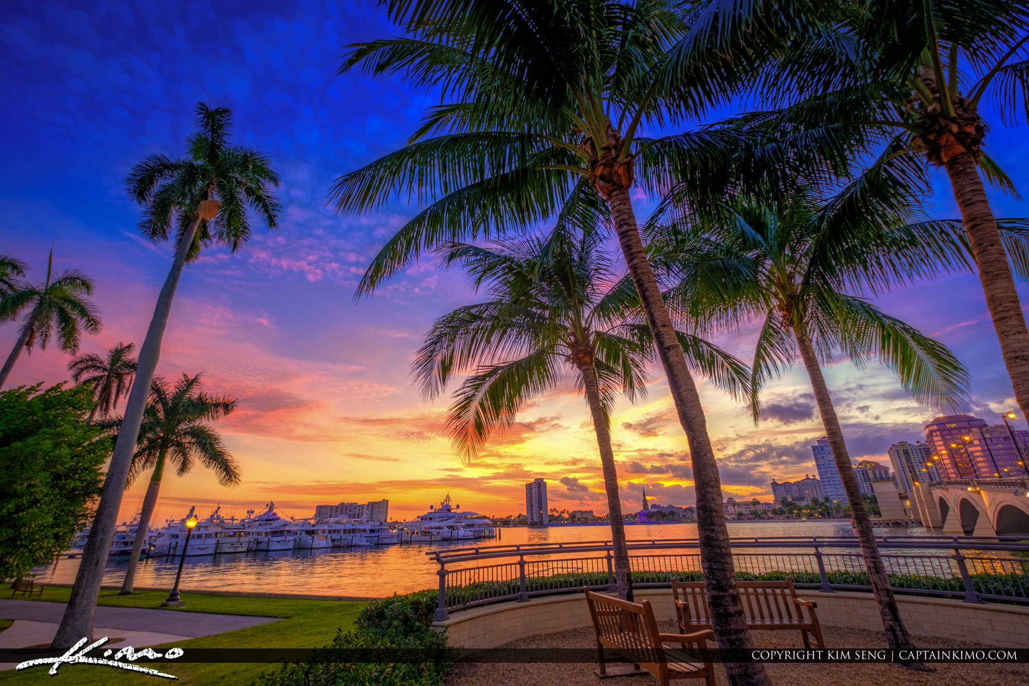 West Palm Beach Sunset Under Coconut Tree Waterway