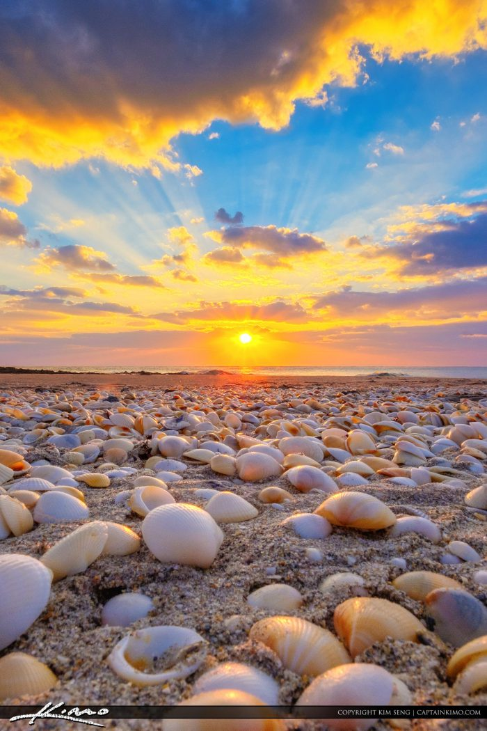 Ocean Reef Park Sunrise with Seashells Vertical