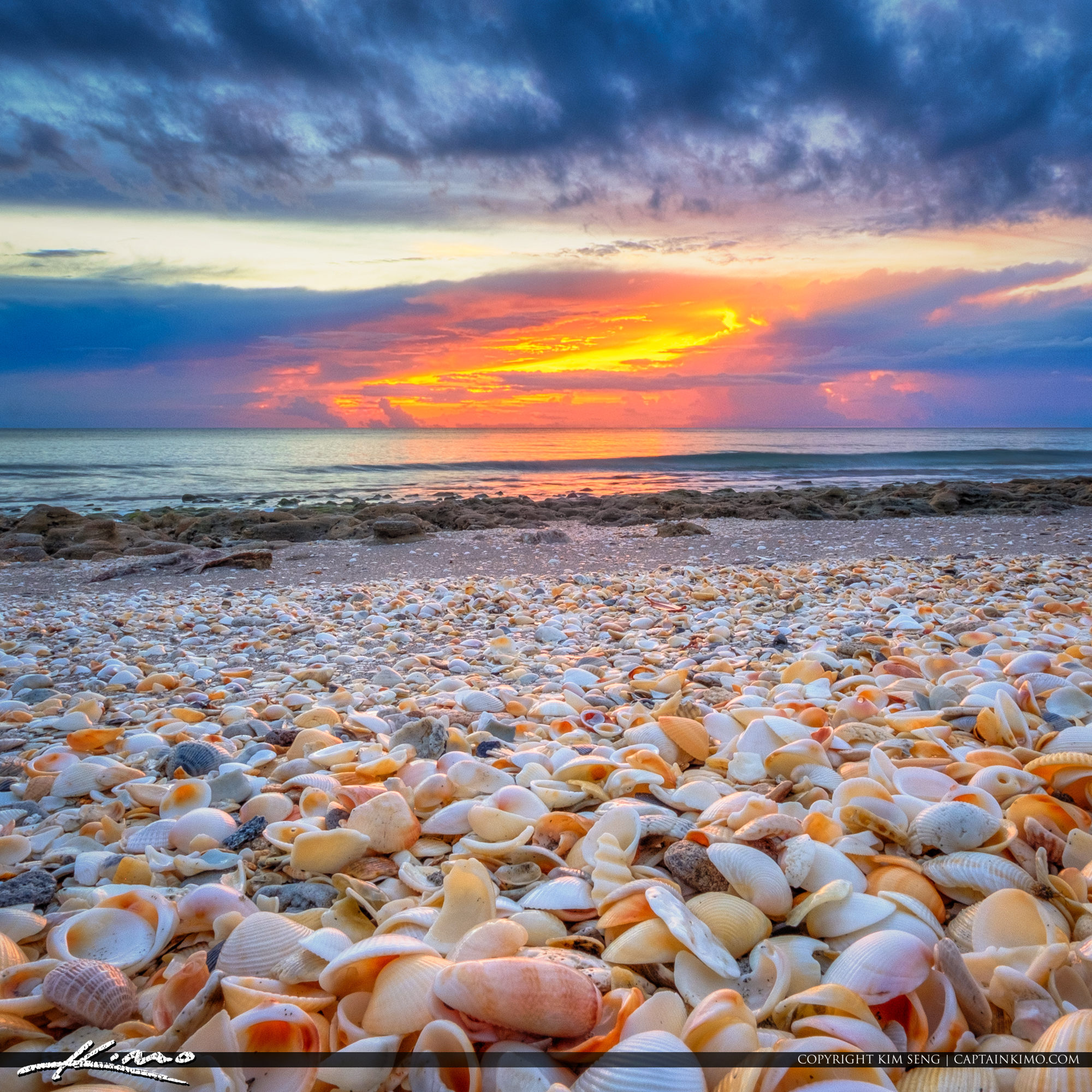 Seashells at Coral Cove Park During Sunrise