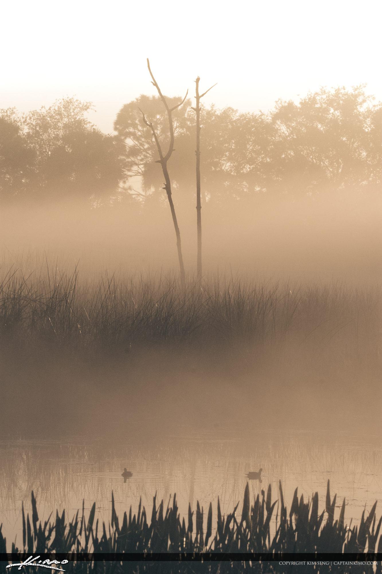 Green Cay Wetlands Foggy Morning