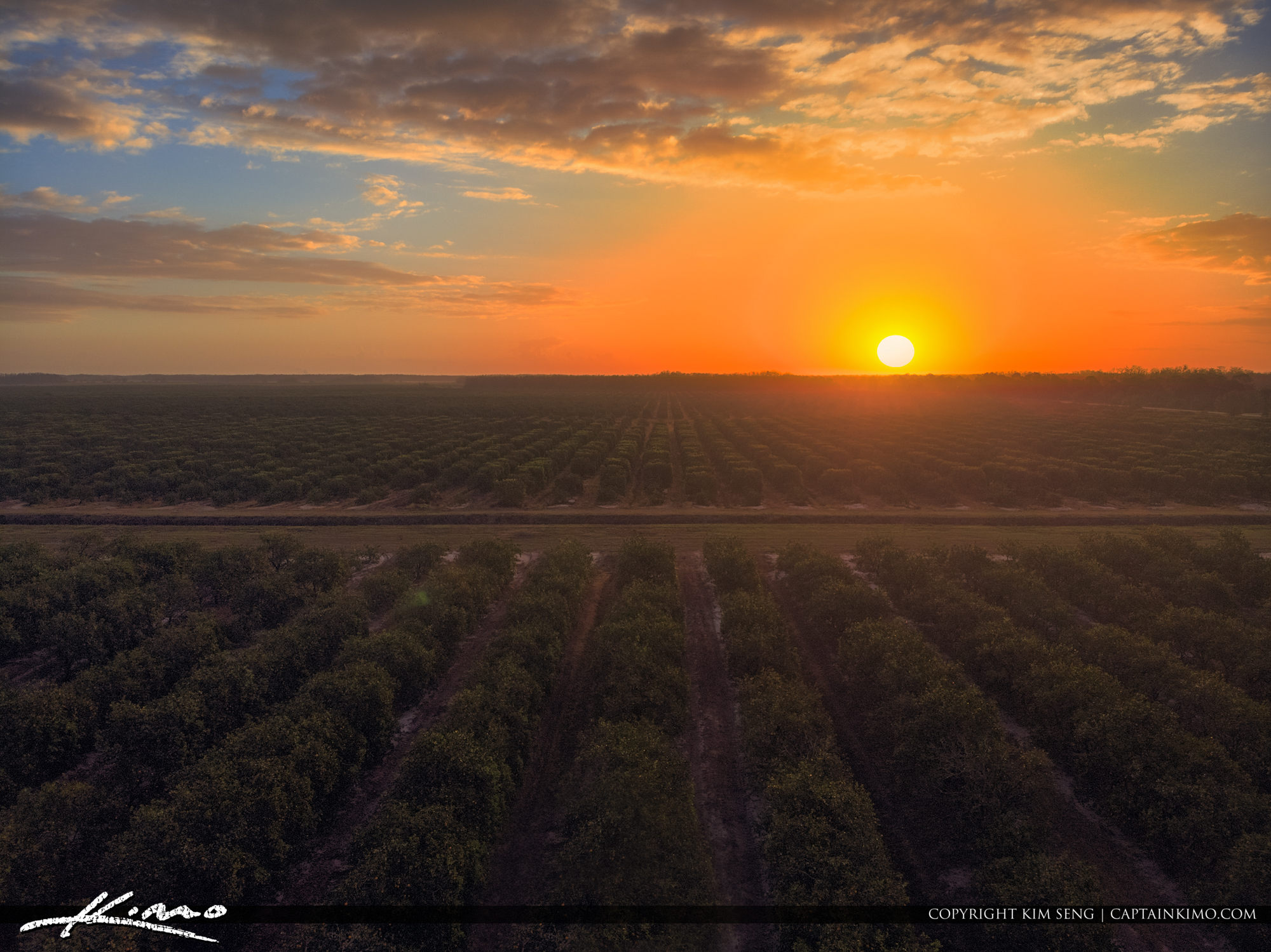 Clewiston Florida Sunrise Over Orange Grove