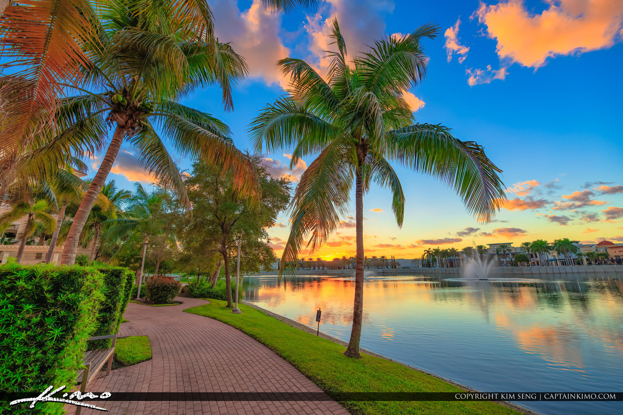 Coconut Tree along Lake at Palm Beach Gardens