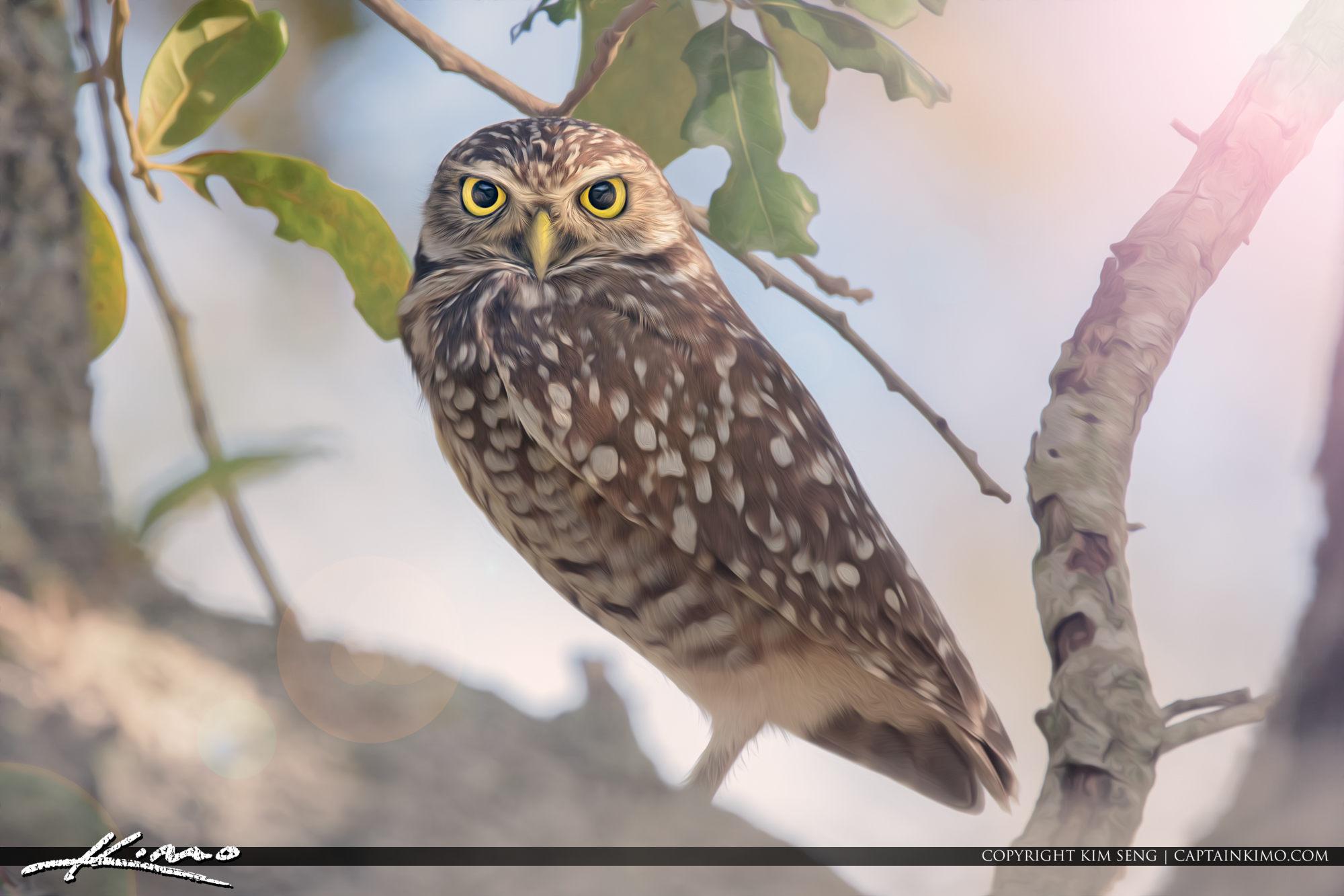 Borrowing Owl Art Hollywood Florida