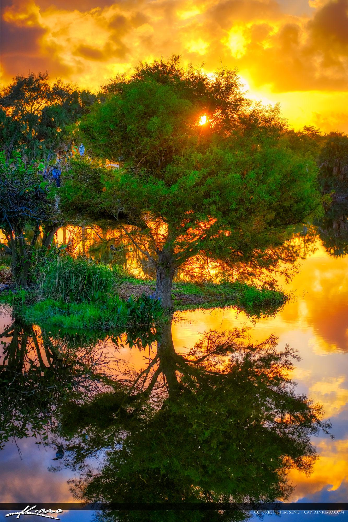 Cypress Tree Wakodahatchee Sunrise
