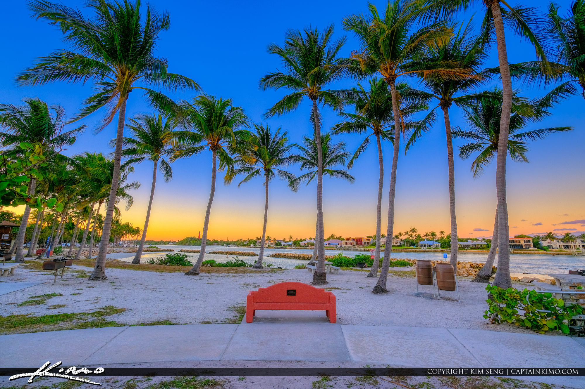 Dubois Park Coconut Trees at Memorial Bench Along the Waterway Jupiter Florida