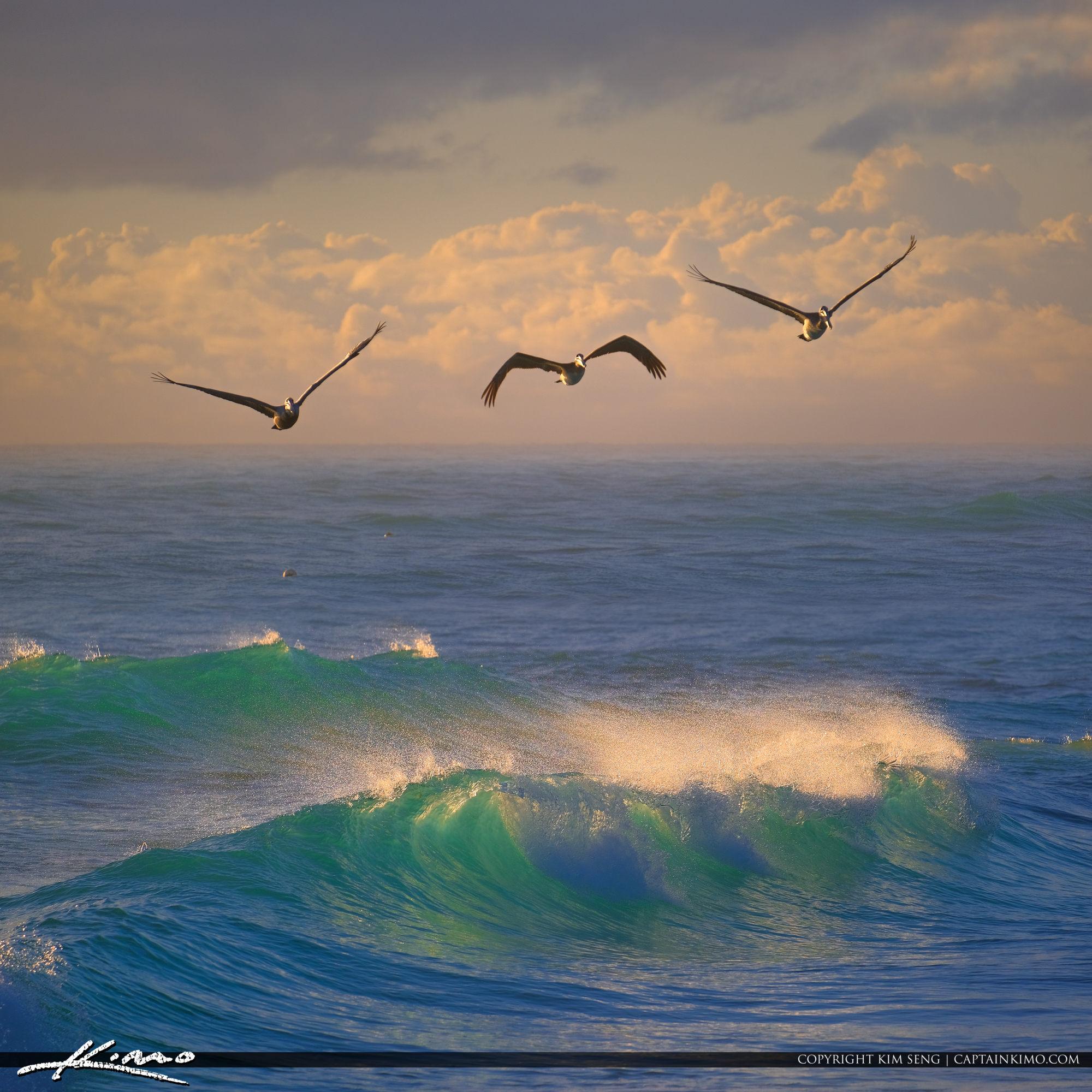 Jupiter Inlet Lighthouse Early Morning Ocean Wave Pelican