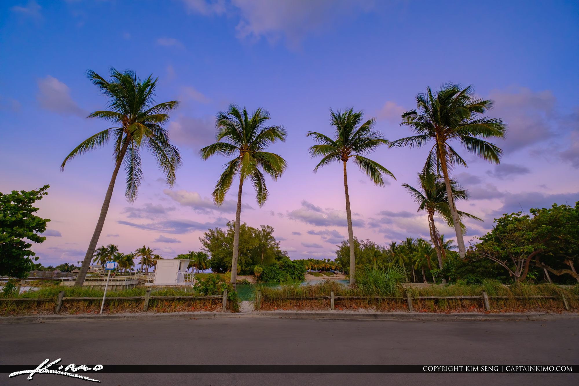 Jupiter Beach Coconut Trees