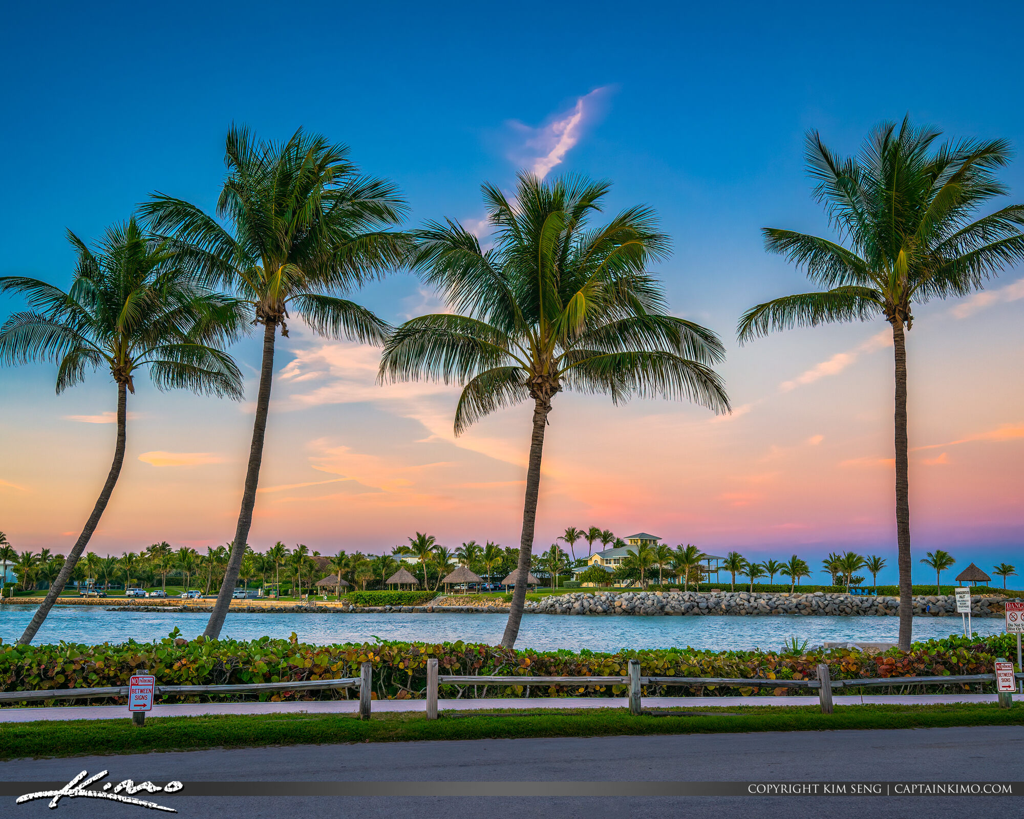 Jupiter Inlet Coconut Trees