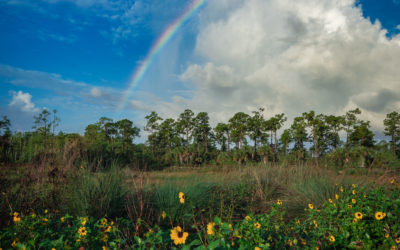 Cypress Creek South Natural Area Rainbow and Sunflower