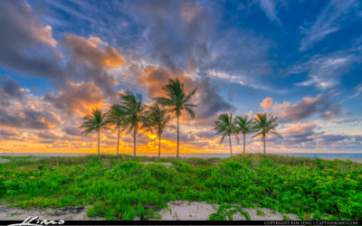 Singer Island Coconut Trees at Beach During Sunrise