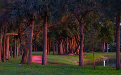 Walk in the Park Lake Catherine Florida Palm Beach Gardens