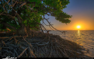Florida Keys Mangrove at Sunrise along the Trail