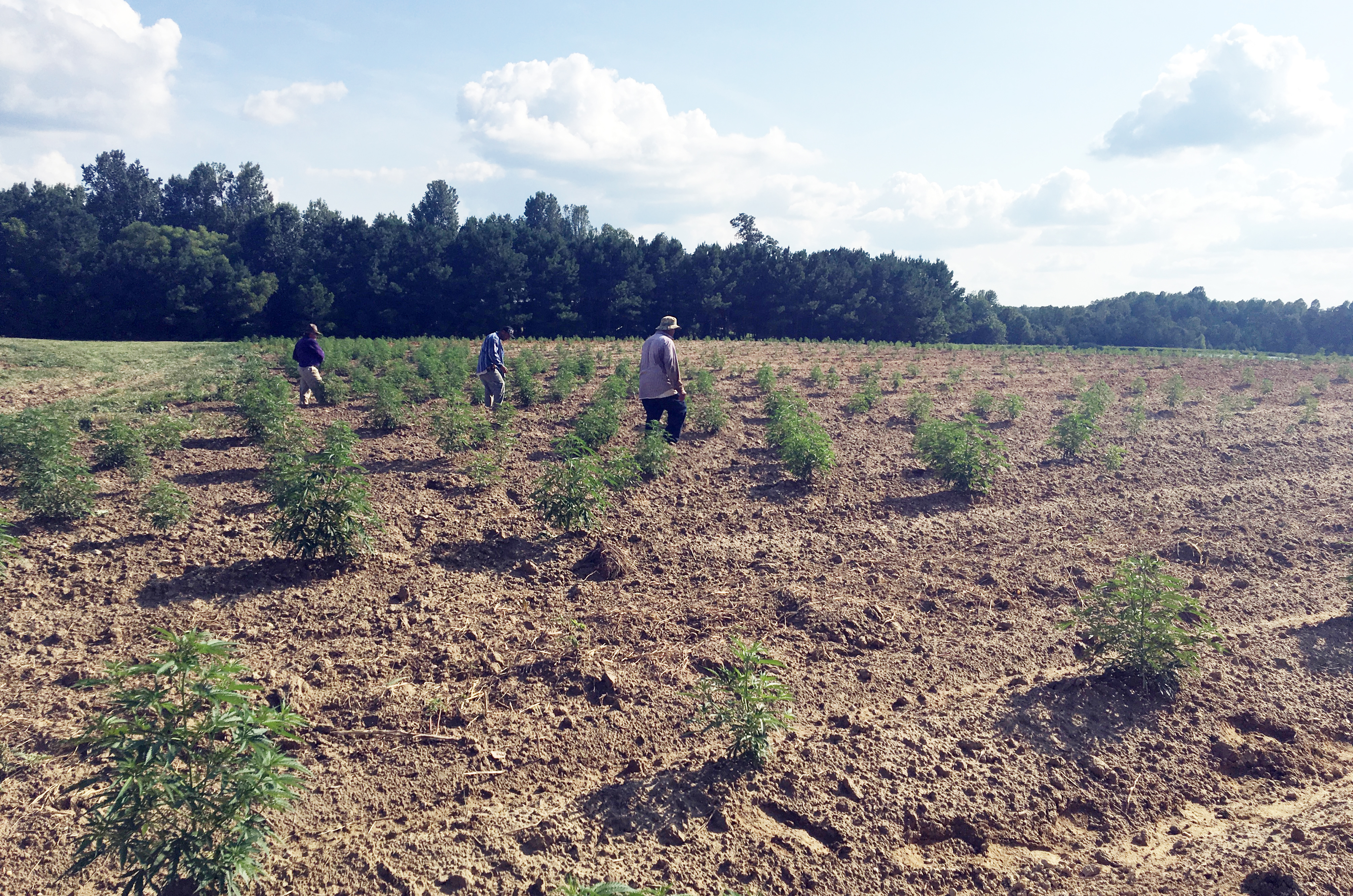 North Carolina farmers high on prospects for state's newest cash
