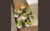 Set of 8 Small Succulents with Round Cement Pots