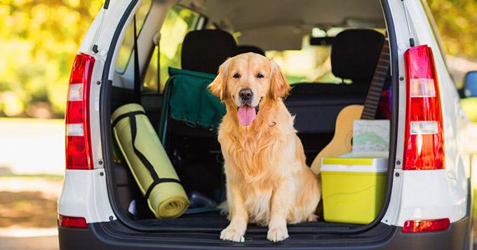 Dicas de Como Transportar Animais no Carro com Segurança