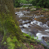 Streams of Pisgah National Forest by David Bunch