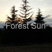 Forest Sun by Alberto Ache